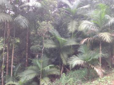 Terrenos - Terreno a 2km do Centro, Lugar Tranquilo